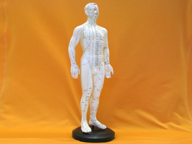 経絡人体モデル