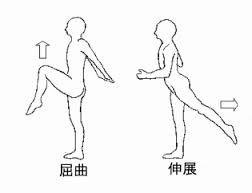 股関節 屈曲 に対する画像結果
